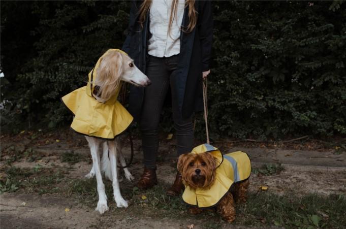 Los mejores seguros para mascotas